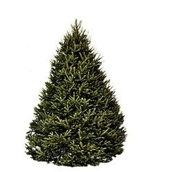 hilltop christmas tree farms launches modern delivery service - Hilltop Christmas