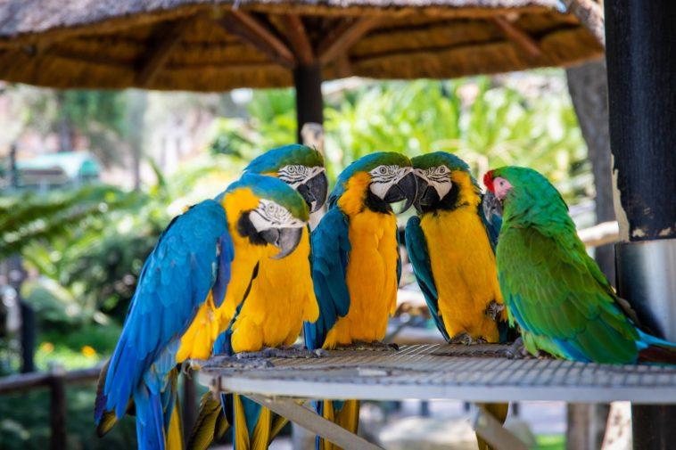 American Zoos Shut Down Due To Coronavirus