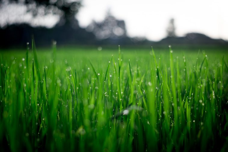 6 Tips For Keeping Your Lawn Green All Summer