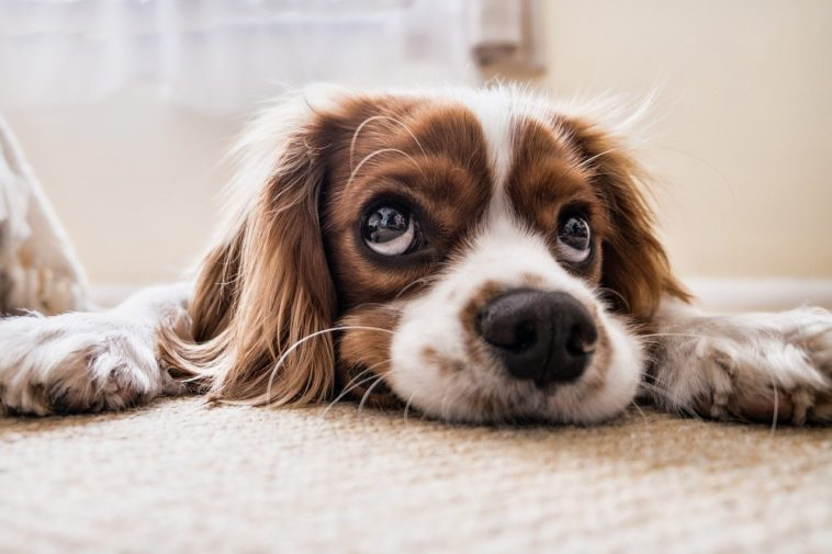 Top Signs Your Dog is Sick