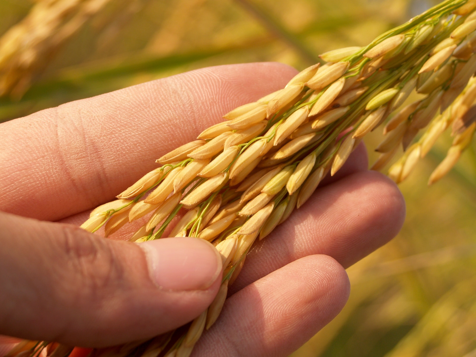 4 Things to Teach Kids about How Grain is Processed